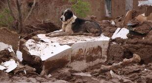 Tragiczne powodzie w Afganistanie (PAP/EPA/JALIL REZAYEE)