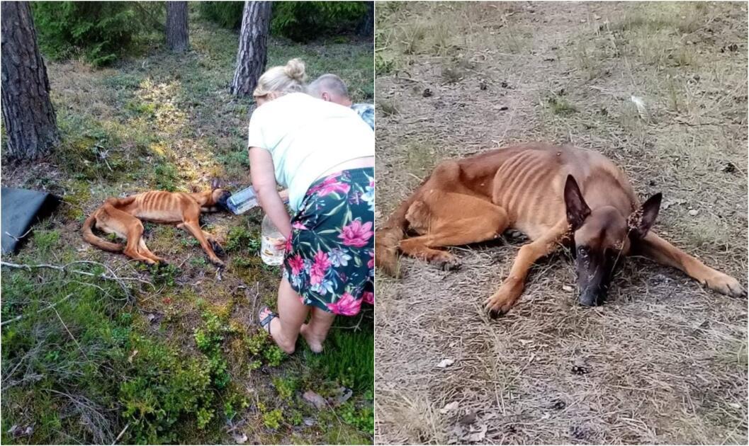 Porzucony Niki leżał pod drzewem i czekał na śmierć. Z głodu nie mógł się ruszyć
